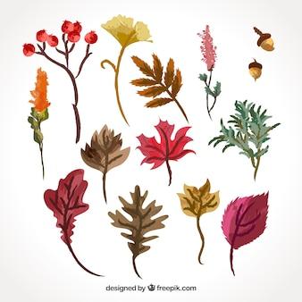 Verscheidenheid van aquarelbladeren