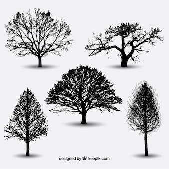 Verscheidenheid van boomsilhouetten