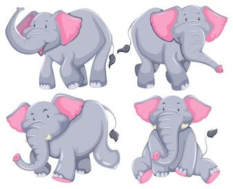 Vier olifanten in verschillende posities