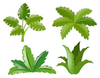 Vier verschillende soorten planten