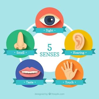 Vijf zintuigen pictogrammen
