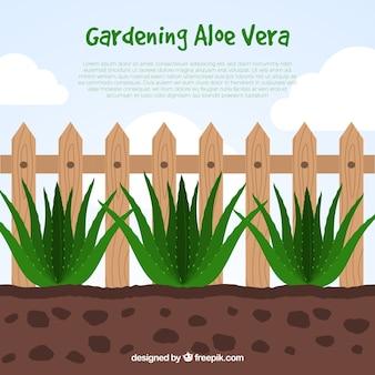Vlakke ontwerp aloë vera gardening infographic