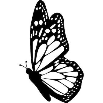 Widok z boku skrzydła motyla ze szczegółowymi