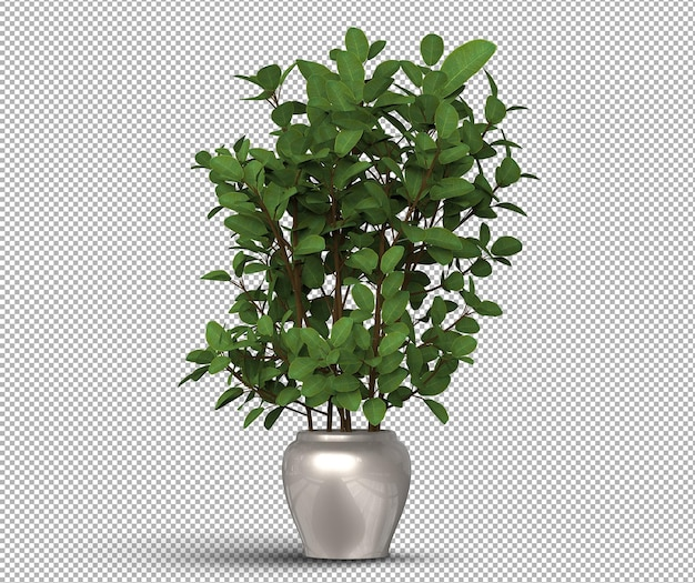 3d render izolowanych realistycznych roślin w doniczce