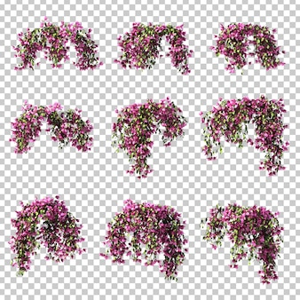 3d rendering bougainvillea obwieszenia set