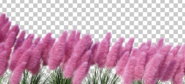 3d rendering karłowaty pampasy trawy przedpole