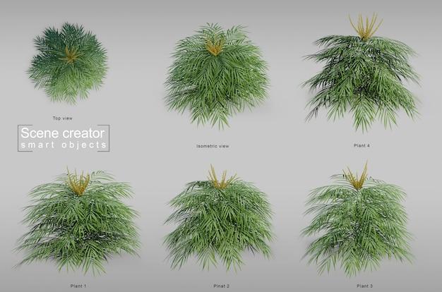 3d rendering miękki caress mahonia drzewo