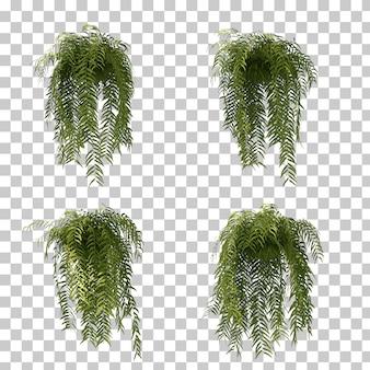 3d rendering paprociowy drzewo
