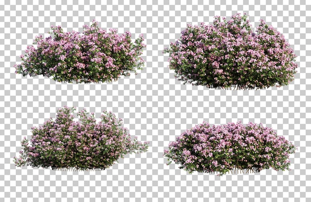 3d rendering raphiolepis indica