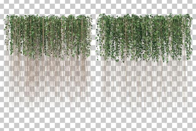 3d rendering zasłona bluszcz