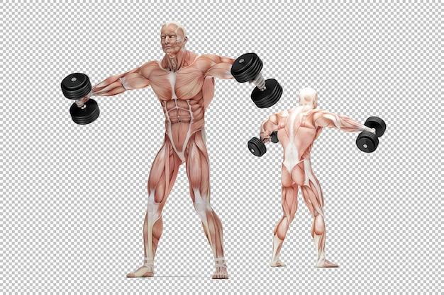 Anatomiczna ilustracja ćwiczeń ramion