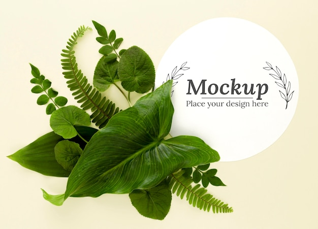 Asortyment zielonych liści widok z góry z makietą