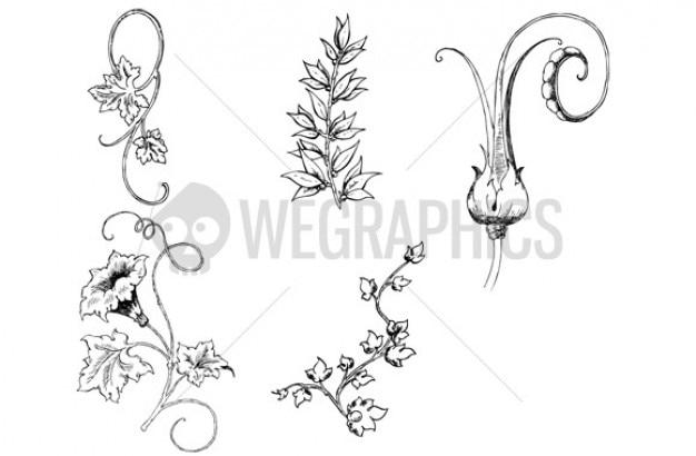 Barokowe rośliny