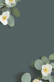 Biały mak z tłem liści eukaliptusa