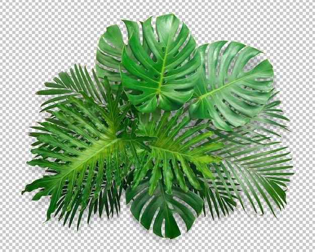 Bush zielony liść monstera na białym tle