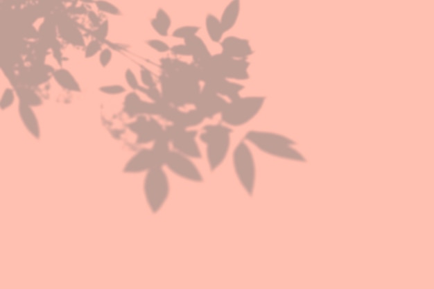 Cień liści na ścianie