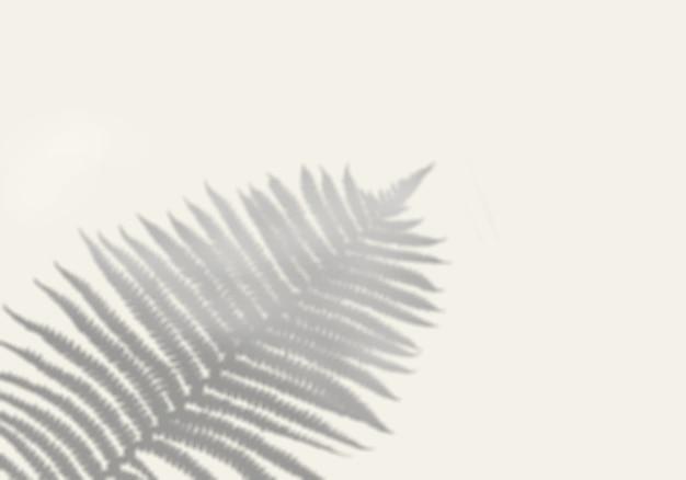 Cień trawy polnej na białej ścianie