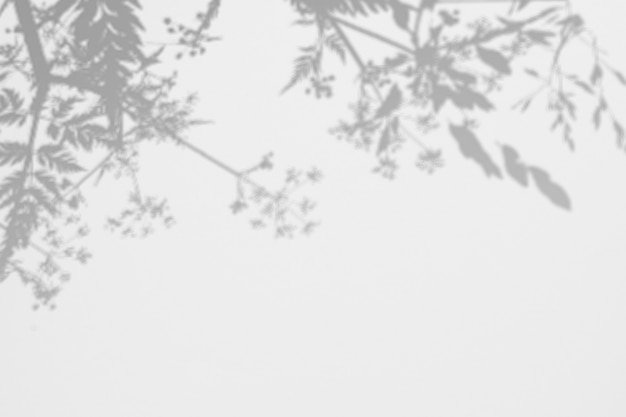 Cienie dzikie zioła i kwiaty na białej ścianie