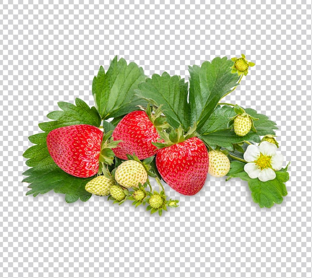 Dojrzałe truskawki z liśćmi na białym tle