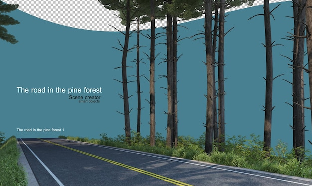 Droga w sosnowym lesie