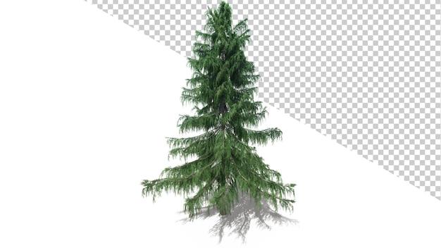 Drzewo cedrowe z alaski z odosobnionym drzewem renderowania 3d