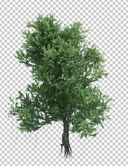 Drzewo obiekt natura na białym tle