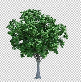 Drzewo przedmiot natura na białym tle