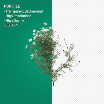 Drzewo renderowania 3d na przezroczystym tle