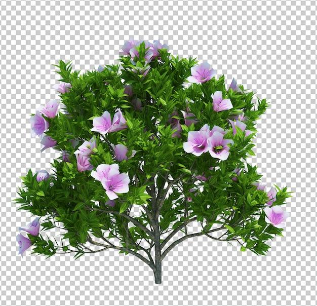 Drzewo z kwiatami na białym tle