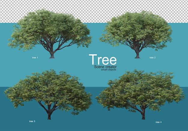 Duże drzewa o różnych kształtach