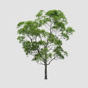 Eukaliptusowy drzewo z odosobnionym tłem, drzewo 3d odpłaca się