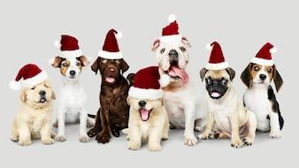 Grupa szczenięta w Boże Narodzenie kapelusze z okazji świąt Bożego Narodzenia