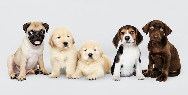 Grupowy portret pięć uroczych szczeniaków