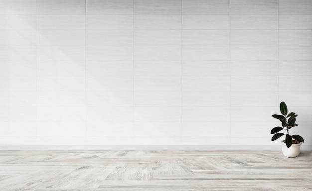 Gumowa figa w pustym pokoju