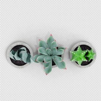 Isometric rośliny 3d rendering