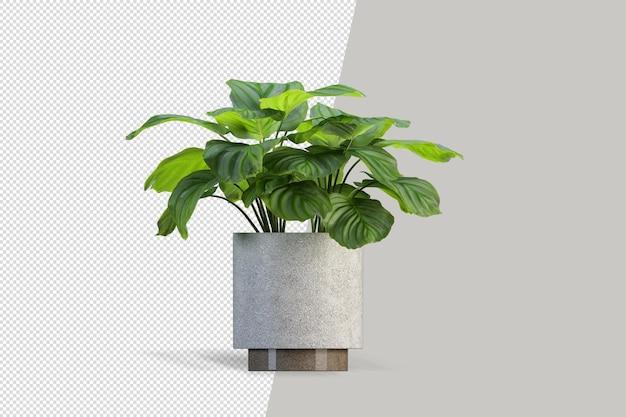 Izometryczne renderowanie 3d roślin