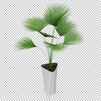 Izometryczne roślin
