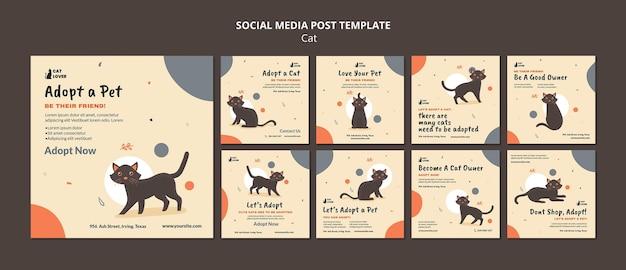 Kolekcja postów na instagramie do adopcji kota