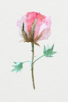 Kolorowa akwarela ilustracja naturalny kwiat