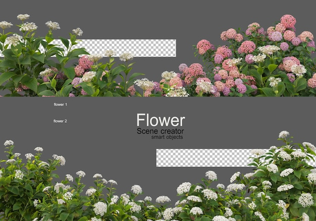 Kolory różnych rodzajów kwiatów