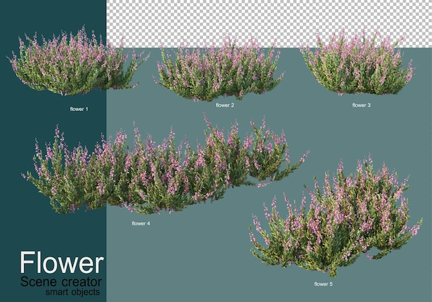 Kompozycja krzewów w wielu rodzajach kwiatów