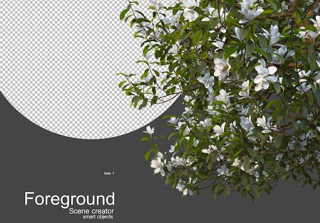 Kwitnące drzewa przed kamerą