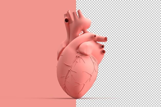 Minimalistyczna ilustracja ludzkiego serca