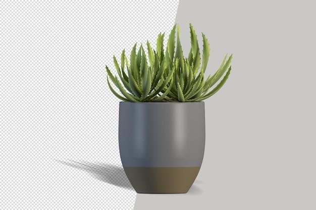 Na białym tle roślina w makiecie puli