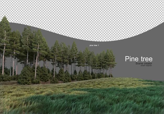 Na środku pola sosnowy las