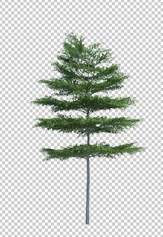 Natura przedmiota drzewa bielu odosobniona przestrzeń