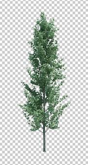 Natura przedmiota drzewa odosobniony biel