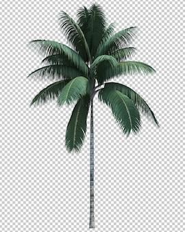 Natura przedmiota kokosowego drzewa odosobniony biel