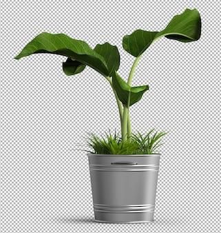 Odpłaca się odosobniona roślina. widok izometryczny z przodu. 3d.