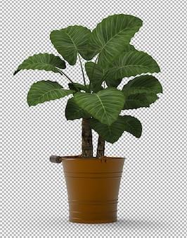 Odpłaca się odosobniona roślina. widok izometryczny z przodu. przezroczysta ściana. premium 3d.